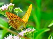 jardin papillons♡