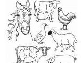 dessin animaux ferme