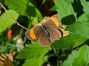 papillon jour fait très discret rare...
