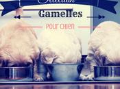 Sélection gamelle pour chien