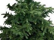 Faites vous livrer votre sapin Noël avec Interflora