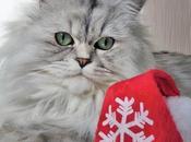 Vous avez boules Noël, nous avons Bouboule Noël
