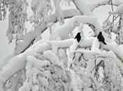 Comment animaux parviennent-ils contourner pièges l'hiver