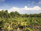 forêts nourricières: clés succès civilisation Maya