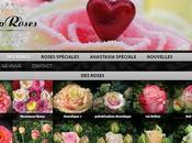 très belles roses bien présentées