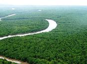 forêt atlantique