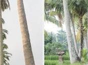 Road-trip Bali Ubud