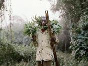 Ghana: Honey collector Pieter Hugo photographer