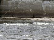 Pêcheurs saumon rivière Matane...