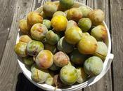 Comment conserver prunes pour l'hiver 2éme partie