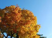 ciel brillant l'automne