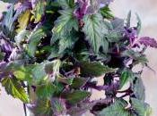 plantes retombantes, lien naturel entre ciel terre