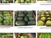 Cucumis, jolis fruits famille Cucurbitacées