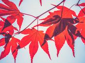 Premier jour l'automne réjouissances
