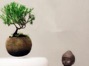#Deco craque pour… Flow Air, plantes lévitation