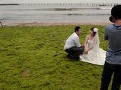 Mariés algues vertes