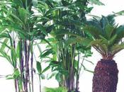 palmiers d'exception