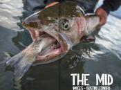 Revive Fishing Journal Hiver