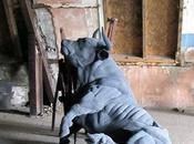 Dorcas Casey Textile sculpture