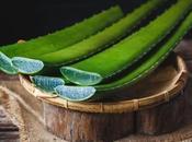 Médecine douce plantes soignent Madagascar