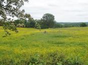 Photos Printemps dans champs