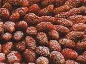 Tarte fine fraises bois beurre d'Isigny