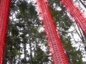 arbres transmettent leurs peurs, extrait vidéo l'intelligence