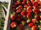 Hausse exportations agricoles Egypte