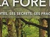 Découvrez secrète forêt