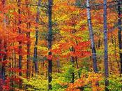 petits moments préférés durant l'automne (vidéo)