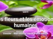 Futura-santé, fleurs émotions humaines