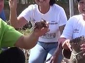 Thaïlande, votre année commençait compétition chasse crabes rizières (vidéo)