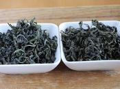 Deux wulong Morokozawa, cultivar Kanaya-midori avec sans torréfaction