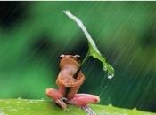 p'tit coin d'parapluie. jour France(9)