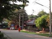 Phitsanulok, ordinations l'or contre coupe d'arbres centenaires (vidéo)