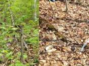 Savoir écouter forêt murmure
