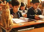 Tombi, chat dans classe