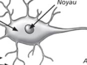 Part réseaux neurones artificielles