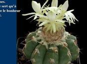 Divers cactus Mexique