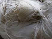 Lucy Glendinning Feather Childs