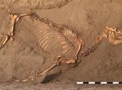3000 ans, cheval inhumé comme hommes