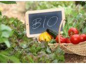 Botanic lance 1ère pour cultiver potager Paris