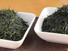 Sencha kabuse-cha cultivar Uji-midori