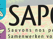 Sauvons pollinisateurs sauvages