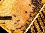 Canada aurait perdu moitié abeilles