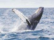 chant baleines