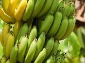 Plus Antillais contaminés pesticide dangereux, chlordécone