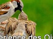 L'expérience Oiseaux