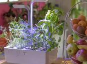 [Test Avis] Potager Véritable, jardin d'intérieur automatique