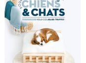 [DIY] Créations design pour Chiens Chats